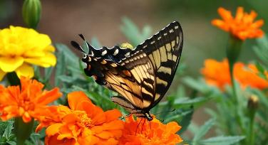 percorso-farfalle