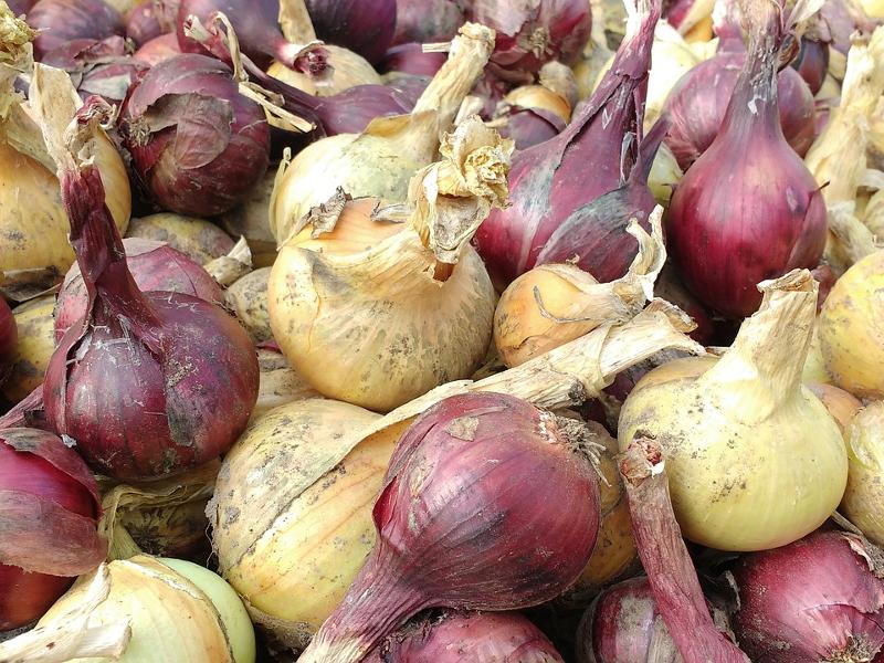 onion-1659997_1280